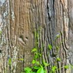 Yeşil üzüm — Stok fotoğraf
