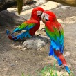 Stock Photo: Colorful macaw