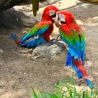 Colorful macaw — Stock Photo #38822103