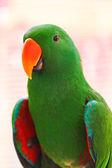 Papuga z dużą ilością zielonych kolory — Zdjęcie stockowe