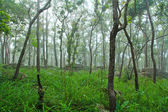 Regenwald — Stockfoto