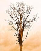 枯れ木 — ストック写真