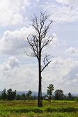 Zmarłe drzewo — Zdjęcie stockowe