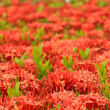Stock Photo: Scarlet flower
