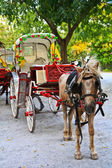 Horse Car — Stock Photo
