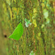 Leaf insects — Stock Photo #40752137