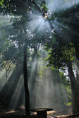 Sunlights thought tree leafes — Stockfoto