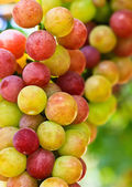 Red grapes. — Stock Photo