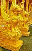 Golden dragons — Stock Photo