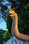 Dragon — Foto Stock