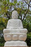 Buda blanco — Foto de Stock