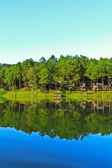 Forest bay on huge river — Stock Photo