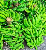 Fresh bananas — Stock Photo