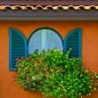 Window and flower — Stock Photo