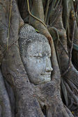 Head of buddha — Stockfoto