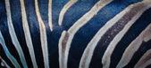 Zebra skin — Stock Photo