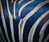 Zebra hud — Stockfoto