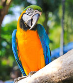 Colorful macaw — Photo