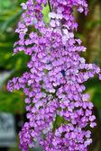Orchideeën in de tuin — Stockfoto