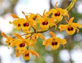 Gele orchideeën bloemen — Stockfoto