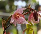 Orchid bloemen in de tuin — Stockfoto