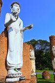 Buda ayakta — Stok fotoğraf