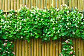 Flowers over bamboo fence — Stock Photo