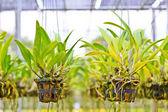 Orkidéer blommor — Stockfoto
