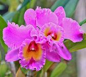 Orchideeën bloemen — Stockfoto