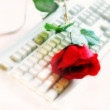 Rose on computer keyboard — Stock Photo