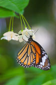 Butterfly in the nature — Stock Photo