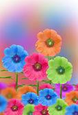 蜀葵花卉 — 图库照片