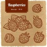 Vector illustration of ripe raspberry. — Stock Vector #33243817