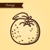 Orange, fresh fruits. — Stockvector