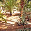 Stock Photo: Tropical garden: trees, palms, cactuses, yuccas, etc.