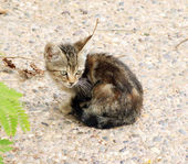 Little sad kitten sitting in the street — Stock Photo