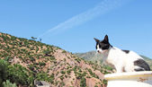 Mountain landscape, cat foreground — Stock Photo