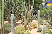 Many various green exotic cactuses of different size — Stock Photo
