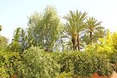 Hermoso jardín de palmeras y otros árboles tropicales — Foto de Stock
