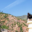 Stock Photo: Mountain landscape, cat foreground