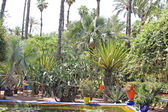 The tropical garden: trees, palms, cactuses, yuccas, etc. — Stock Photo