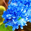 Stock Photo: Beautiful blue flower