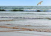 Beautiful ocean shore with waves and a seagull in the sky — Stock Photo