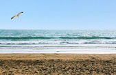 Beautiful ocean shore with waves and a seagull above — Stock Photo