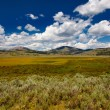 Yellowstone NP — Stock Photo