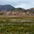 Landmannalaugar — Stock Photo