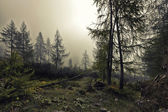 A mystical forest with fog and shining behind trees — Stock Photo