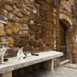 Two cats in tuscany typical street — Stock Photo #33905743