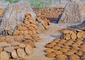 Cow dung cakes — Stock Photo