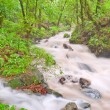 Stock Photo: Creek in dense forest
